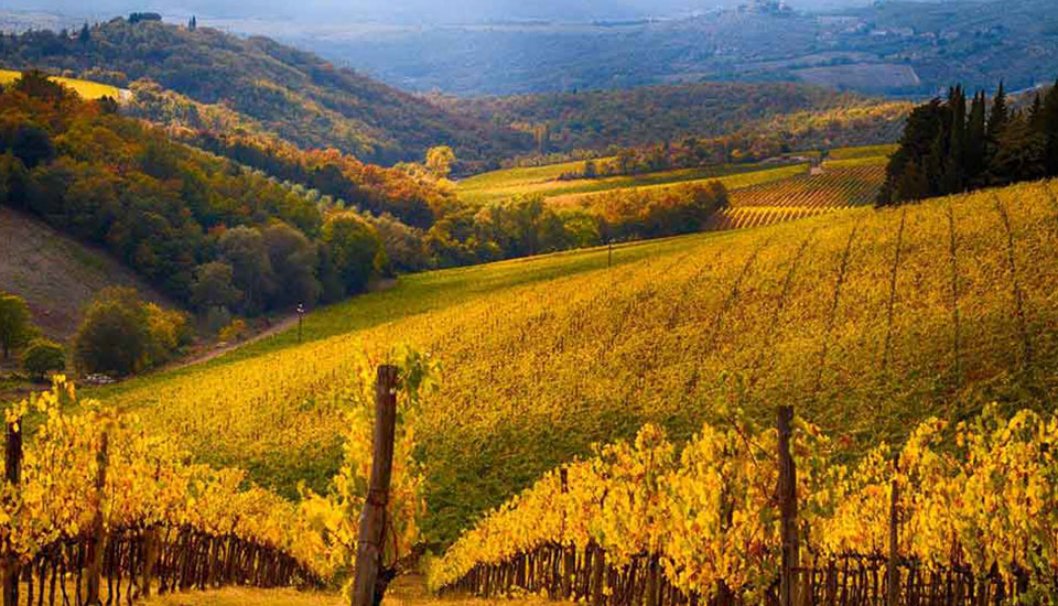 Chianti Day tour from Florence